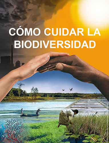 C mo cuidar la biodiversidad - Como cuidar las hortensias de exterior ...
