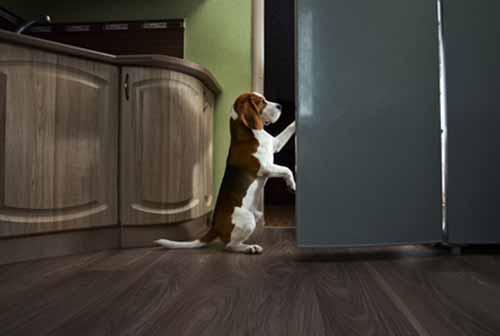 Haz que cierre el refrigerador