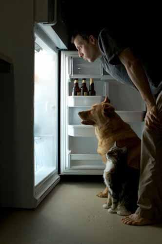 Cómo enseñar a tu perro a que te traiga cerveza del refrigerador
