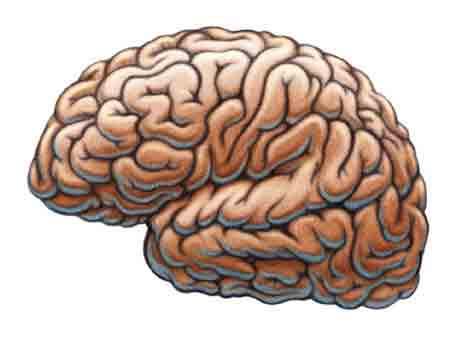 Cómo saber mi coeficiente intelectual