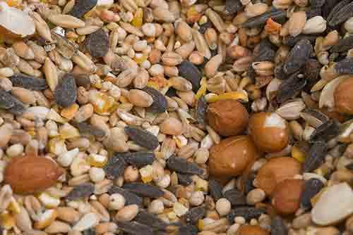 Come nueces y semillas