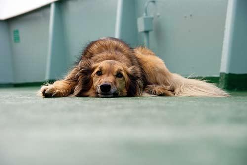 Determina si tu perro ha perdido peso