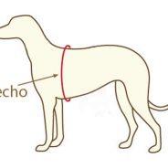 Cómo medir a tu perro para seleccionar su arnés