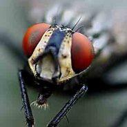 Cómo eliminar las moscas del exterior de tu casa