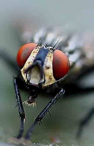 C mo eliminar las moscas del exterior de tu casa - Como sacar las moscas de la casa ...