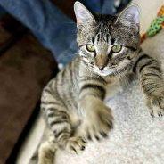 Cómo entrenar a tu gato para que deje de hacer algo que no quieres