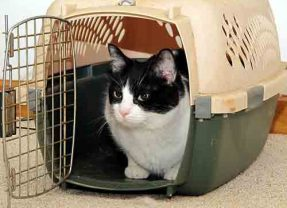 Cómo transportar tu gato por avión