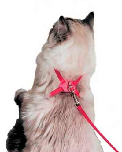 Ponle el arnés en forma de ocho a tu gato