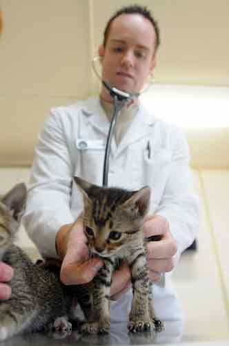 Consulta con tu veterinario