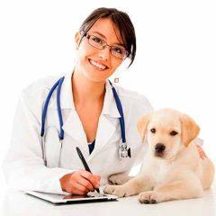Cómo tratar los cálculos renales en los perros