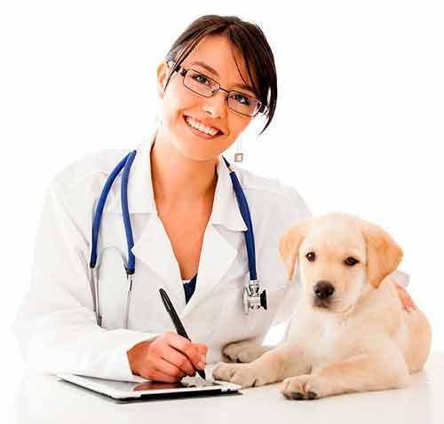 Lleva a tu perro con el veterinario
